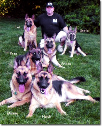 Long Island Dog Training for all Breeds on Long Island