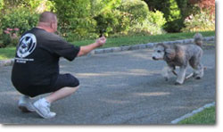 Dog Training for all breeds of dogs